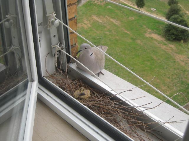 Improvvisamente … sul davanzale della mia finestra.